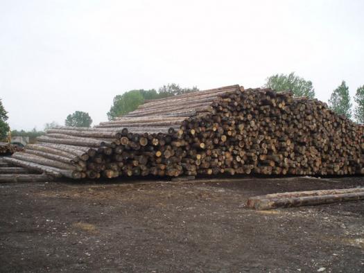 Άγνωστοι έκλεψαν ξύλινους στύλους τηλεπικοινωνιών στη Ναύπακτο