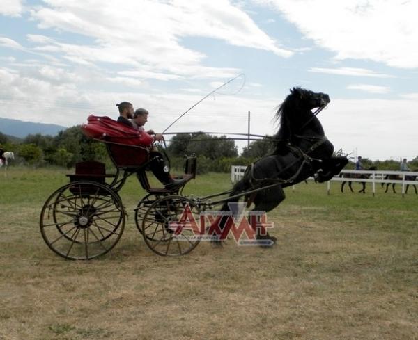 Ανεπανάληπτο ιππικό θέαμα του συλλόγου Ναυπακτίας (Φωτορεπορτάζ)